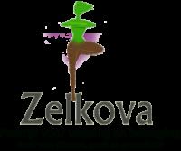 Zelkova